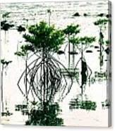Mangroves Canvas Print