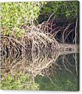 Mangroves In The Gambia Canvas Print