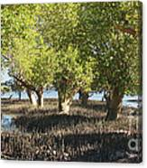 mangroves Madagascar 3 Canvas Print