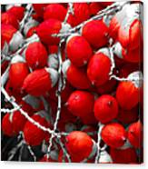 Manila Palm Red Canvas Print