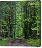Manistee National Forest Michigan Canvas Print