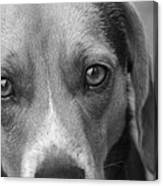Man's Best Friend In Black And White Canvas Print
