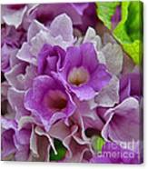 Mansoa Alliacea Canvas Print