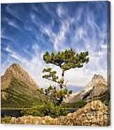 Many Glacier Tree Canvas Print