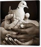 Many Hands Holding A Dove Canvas Print