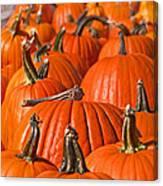 Many Pumpkins In A Row Art Prints Canvas Print