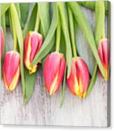 Many Spring Tulip Flowers On White Wood Table Canvas Print