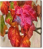 Maple Colors Canvas Print