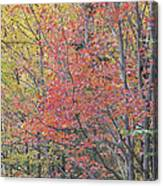 Maple Corner Foliage Canvas Print