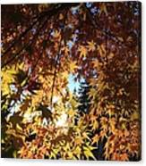 Maple In Fall Canvas Print