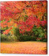Maple In Red And Orange Canvas Print