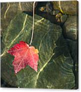 Maple Leaf On Water Canvas Print