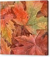Maple Leaf Rag Canvas Print