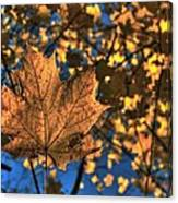 Maple Leaf Still Standing Canvas Print