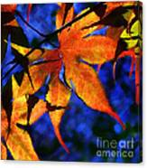 Maple Leaf Tracery Canvas Print