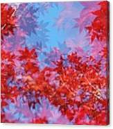 Maple Leaves Canvas Print