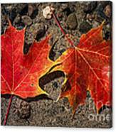Maple Leaves In Water Canvas Print