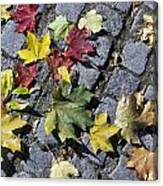 Maple Leaves On Stones Canvas Print