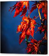 Maple Leaves Shadows Canvas Print