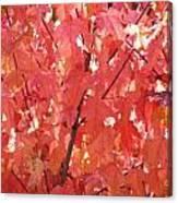 Maple Madder Canvas Print