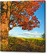 Maple Moon 2 Canvas Print