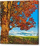 Maple Moon Canvas Print