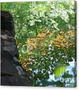 Maple Reflections Canvas Print