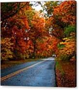 Maple Road Canvas Print