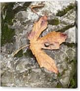 Maple Rock Canvas Print