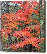Maple Rush In The Fall Canvas Print