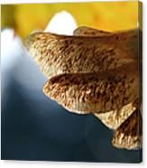 Maple Seeds 2 Canvas Print