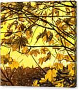 Maple Sunset - Paint Canvas Print