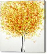 Maple Tree 1 Canvas Print