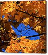 Maple Tree In Autumn Canvas Print