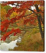 Maple Tree In Autumn Canvas Print