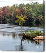 Maple Tree On A Rocky Island Canvas Print