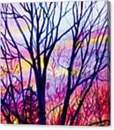 Maple Tree Sunset Canvas Print