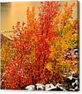 Maples Along The Palisades Canvas Print