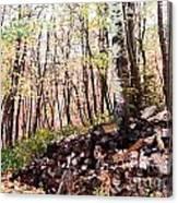 Maples Canvas Print