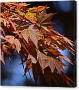 Maples In Spring 2013 Canvas Print