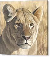 Mara Lioness Canvas Print