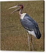 Marabou Stork   #0176 Canvas Print