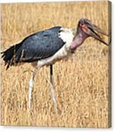 Marabou Stork Kenya Canvas Print
