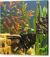 Marble Angelfish Kisses Canvas Print