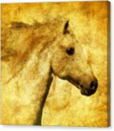 Marbled War Horse Canvas Print