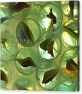 Marbles Cat Eyes Soda 1 B Canvas Print