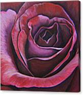 March Rose Canvas Print
