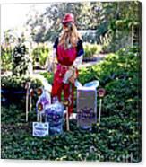 Mardi Gras Scarecrow At Bellingrath Gardens Canvas Print