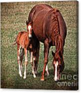 Mare With Foal Canvas Print