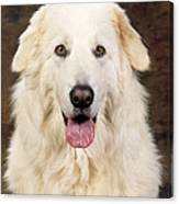 Maremma Sheepdog Canvas Print